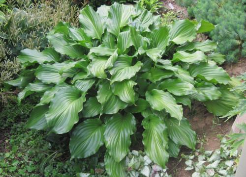 IMG_812719c68f16ceaee4fa.jpg