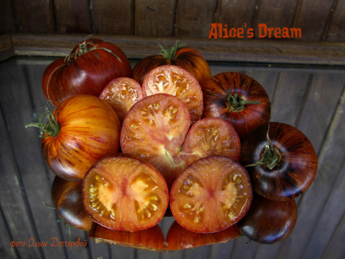 Alices-Dream-A119fe97c8d97030667a.jpg