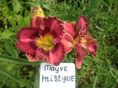 MAUVE-MYSTIOUE-IMG_13555ec1f32ec7c45ce5.jpg