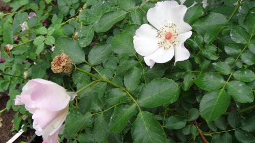 Marie-Bonnafoux-Buisson-20b65852eae5b99f7.jpg